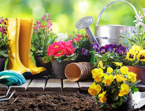 Quali sono i migliori fertilizzanti naturali per il nostro orto e per il giardino?