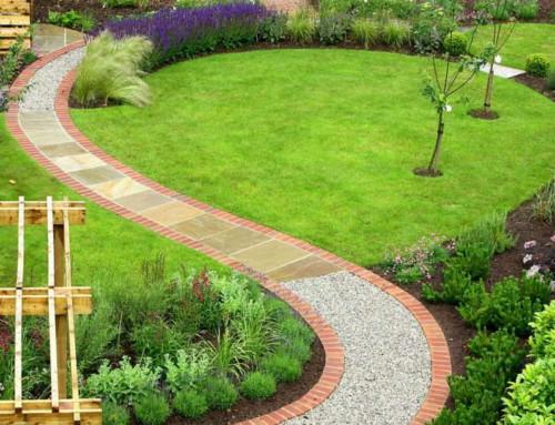 Viburno lucido, la siepe ideale per il tuo giardino