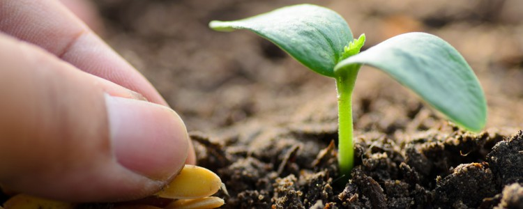 Agricoltura biologica e humus lombrico