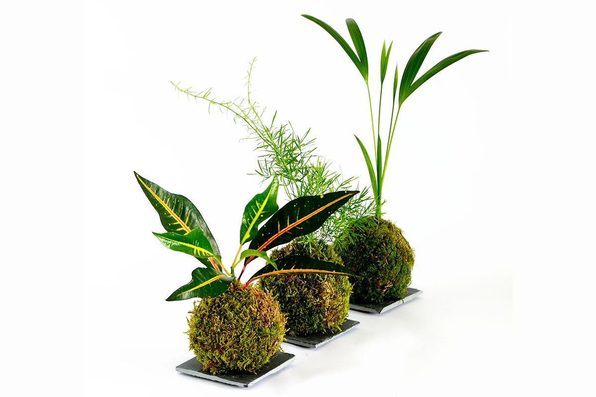 Kokedama come creare un piccolo giardino sospeso la for Creare un giardino semplice