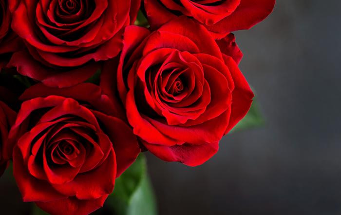 Le rose san valentino La Terra di Gaia